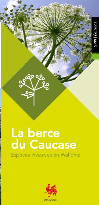 Les espèces invasives en Wallonie : La berce du Caucase