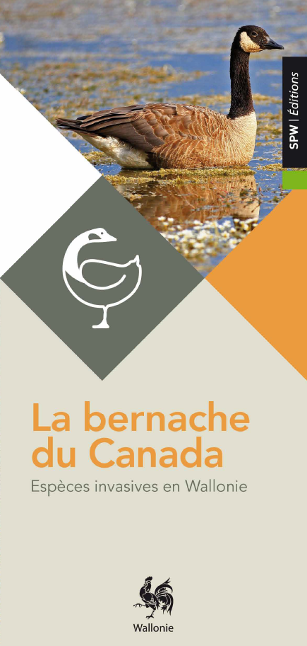 La Bernache du Canada : Espèces invasives en Wallonie