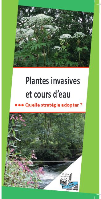 Plantes invasives et cours d'eau : Quelle stratégie adopter ?